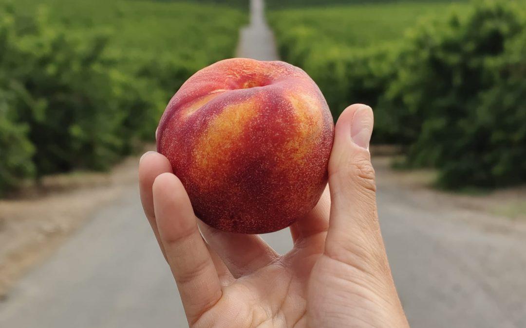 Aitona, turismo de la fruta en 360º